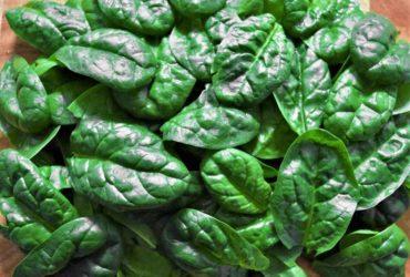 Eines der besten Blattgemüse - Spinat
