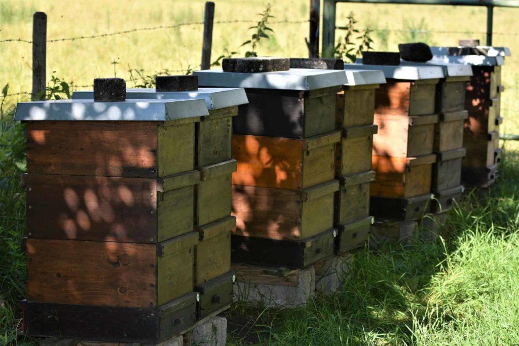 Honig-der goldene Saft der Bienen- Bienenstock-Bellswelt