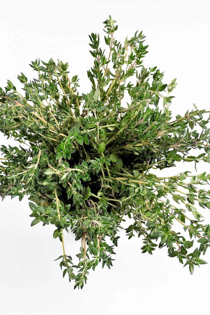 Thymian - das natürliche Antibiotikum Thymianpflanze BellsWelt