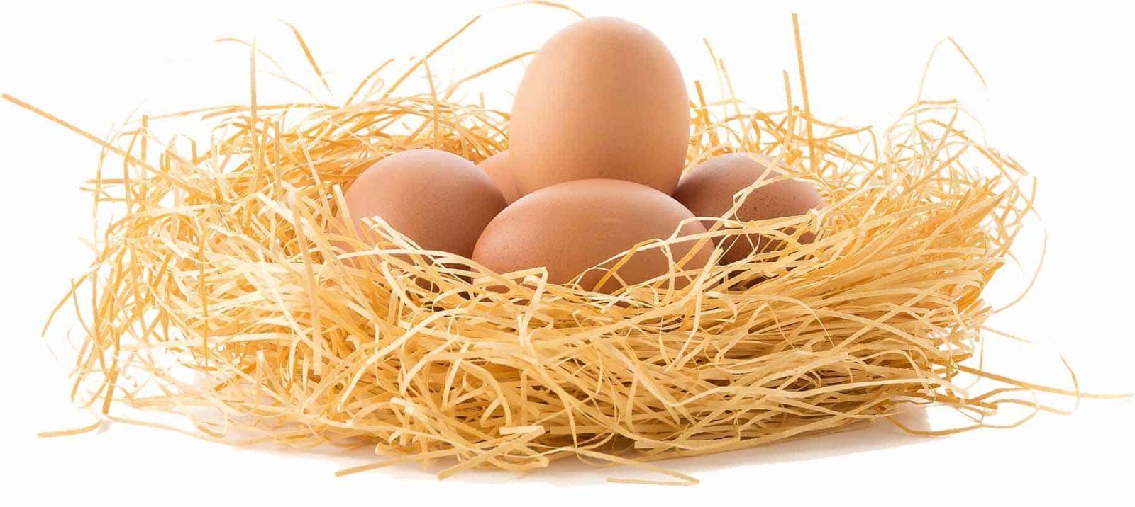 Eier sind gesund!-Titel-BellsWelt
