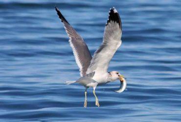 Hering - Gesundheit aus dem Meer-Titel-BellsWelt 2