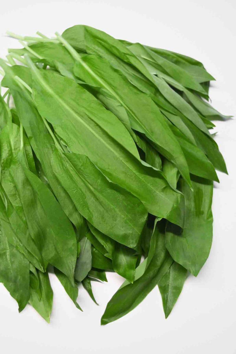Bärlauch - heilend und gesund - Bärlauchblätter - BellsWelt