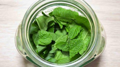 Bärlauch - heilend und gesund - Blätter in Glas füllen- BellsWelt