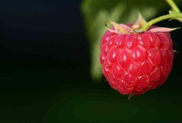 Himbeeren - die Superfrüchte - Titel - BellsWelt