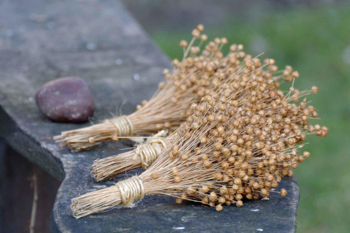 Leinsamen - gesundes regionales Superfood - Getrockneter Flachs - BellsWelt