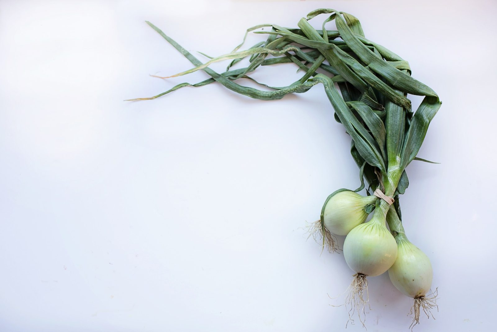 Zwiebeln-heilsames und gesundes Gemüse - Titelbild - BellsWelt