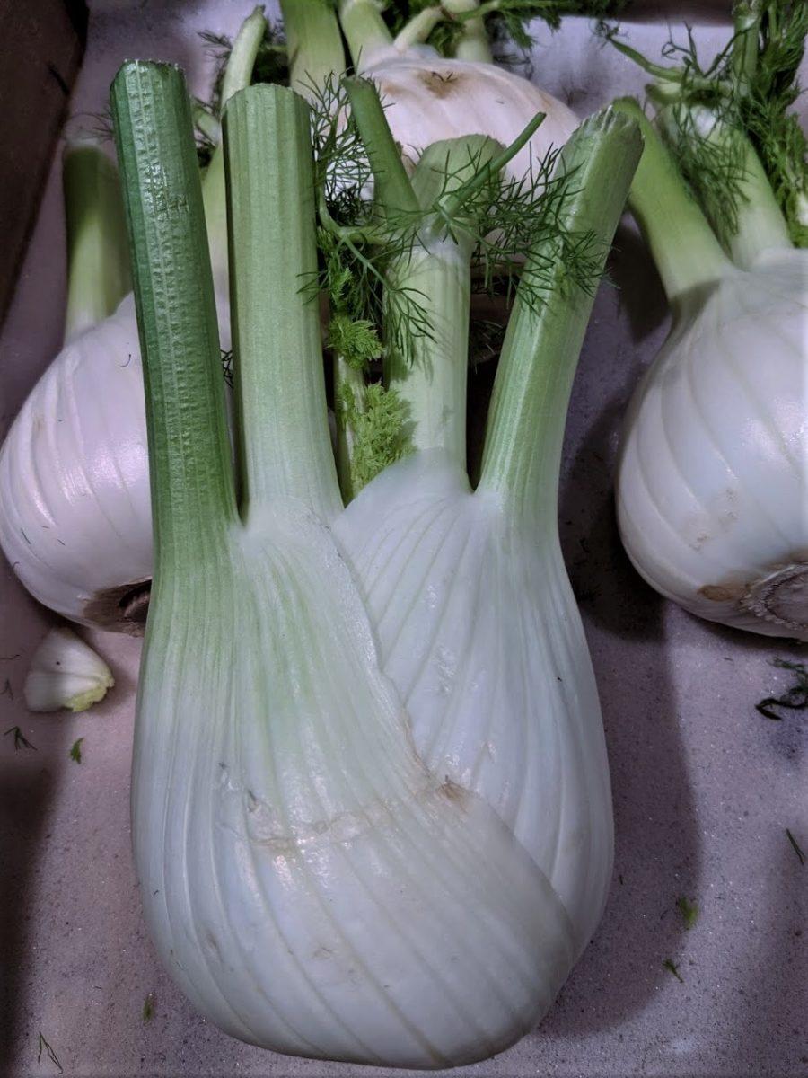 Fenchel – Heilpflanze, Gemüse und Gewürz-Fenchel im Verkauf - BellsWelt