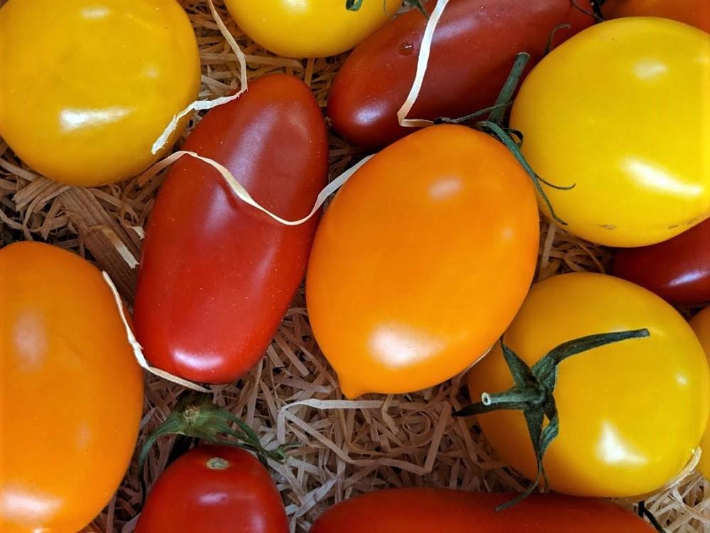 Powerfrucht Tomate - Tomatenvielfalt - BellsWelt