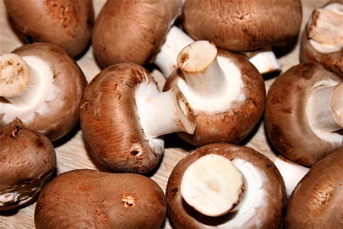 Champignons – gesund und köstlich - braune Champignons - BellsWelt