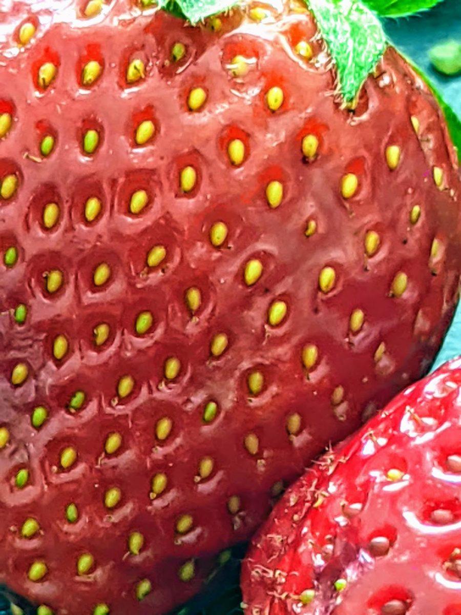 Erdbeeren – leckere Heilpflanzen - Nüsschen - BellsWelt