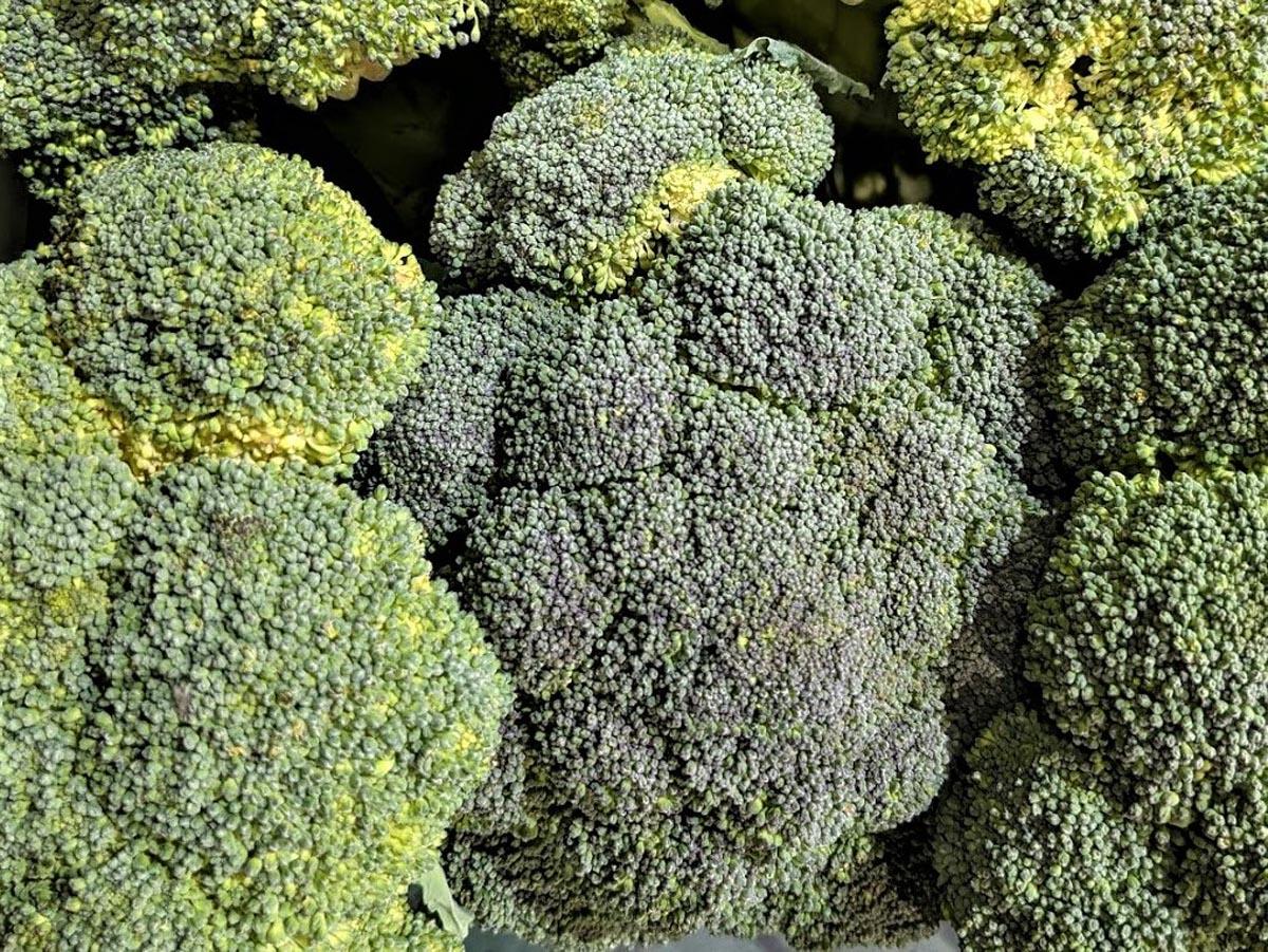 Brokkoli – grünes Heilmittel Brokkoli im Verkauf - BellsWelt