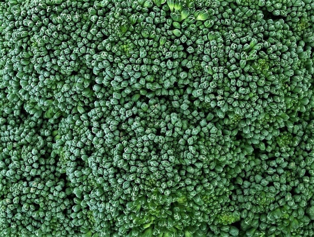 Brokkoli – grünes Heilmittel - frischer Brokkoli - BellsWelt
