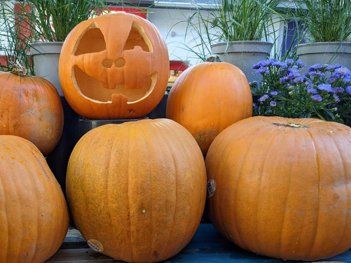 Kürbis – Gesundheit in drei Varianten - Halloweenkürbis - BellsWelt